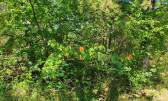 Istra, Grožnjan, gornja Bujština, šuma na prodaju
